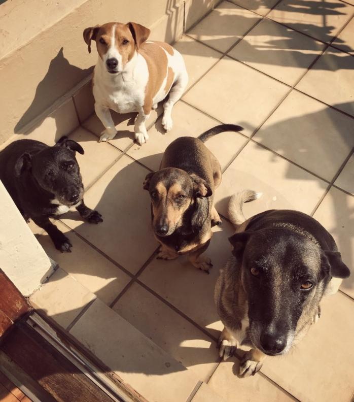 kiron dogs
